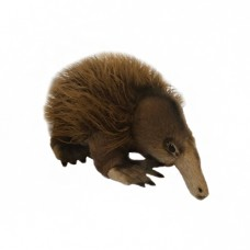 Harry the Echidna - A Bocchetta Plush Toy
