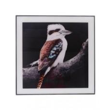 Kookaburra Art Glass Portrait